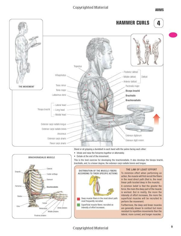Strength Training Anatomy-3rd Edition: | Fitness | Pinterest ...