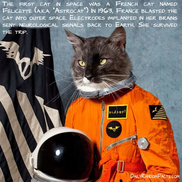 The first cat in space was a French cat named Felicette (a
