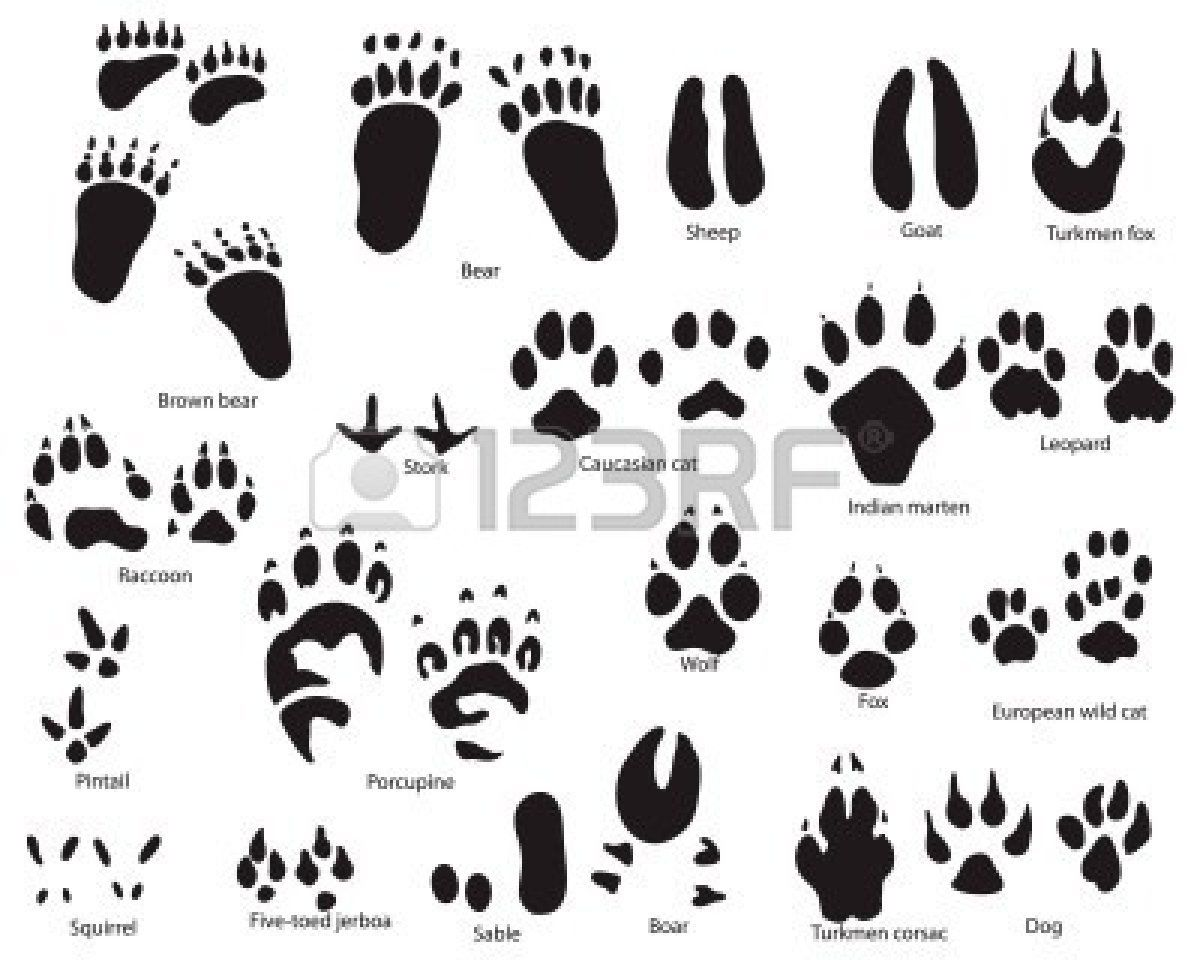 Biggest Collection Of Animal And Bird Trails With Title Paw Print Clip Art Animal Footprints Hedgehog Art