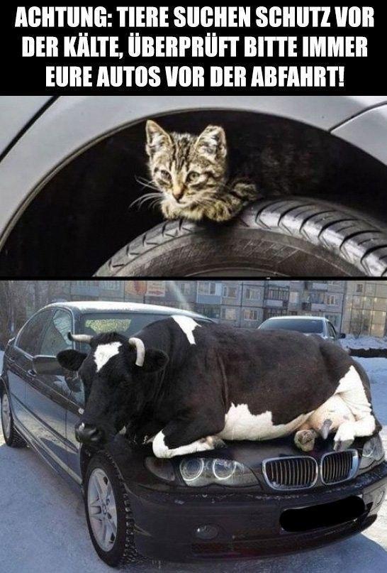 Meme – Achtung, ich # lustige Tiere