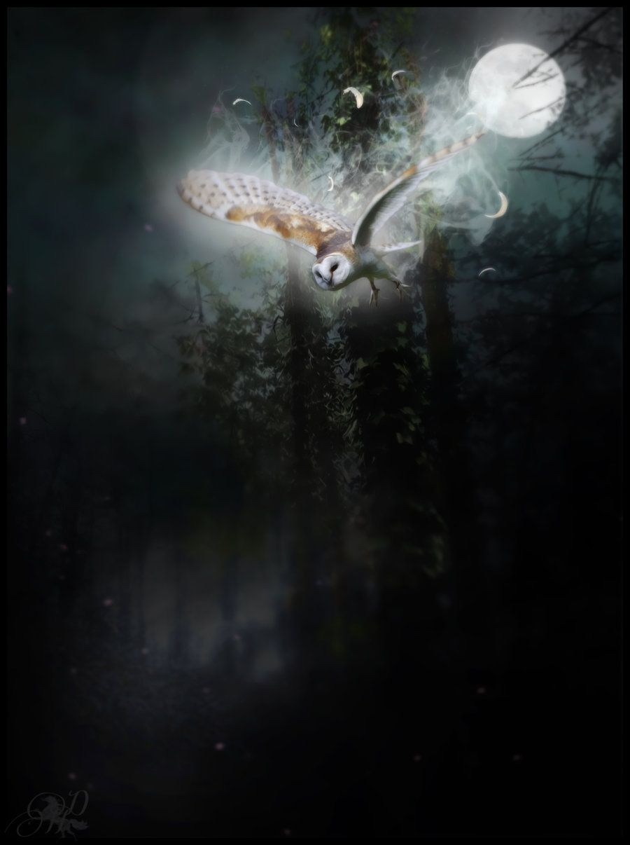 barn owl art   ...........click here to find out more     http://googydog.com