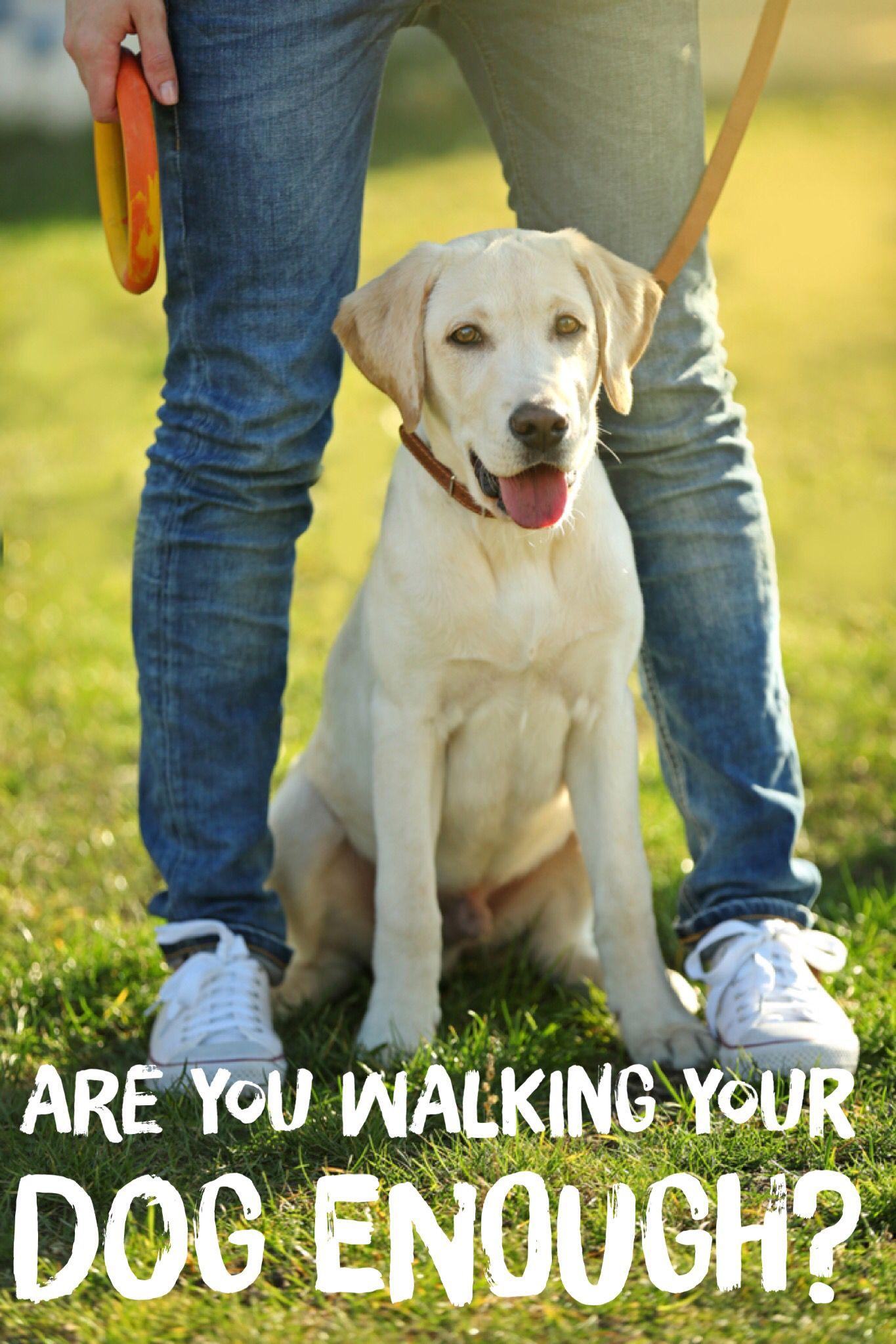 A Survey Revealed That 40 Of Pet Parents Aren T Walking Their