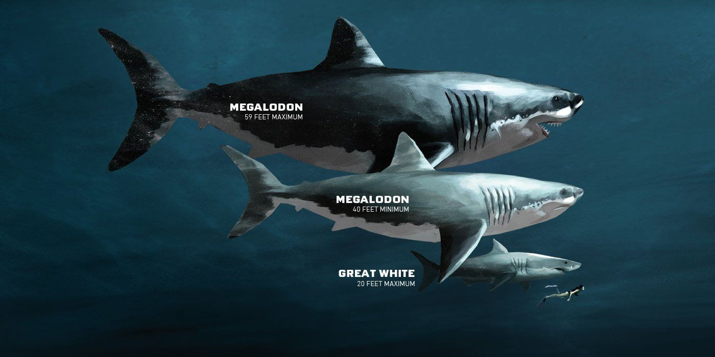 megalodon real | Strange But Amazing | Megalodon shark