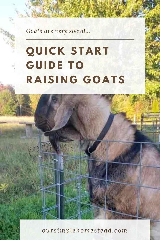 Beginners Guide to Raising Goats in 2020 | Raising goats ...