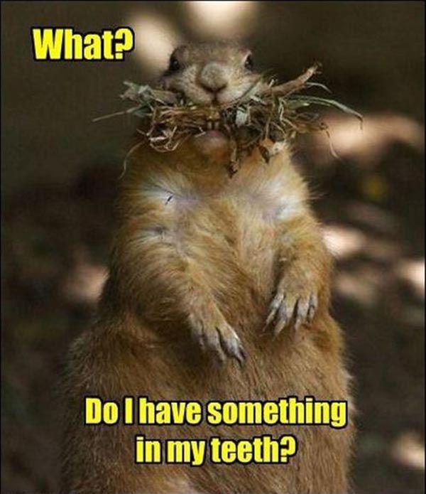 Squirrel kiss meme - photo#7
