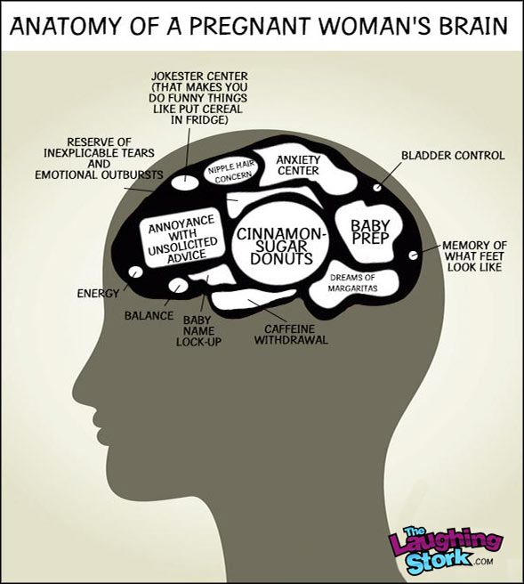 Anatomy Of A Pregnant Womans Brain From The Laughingstork Mom