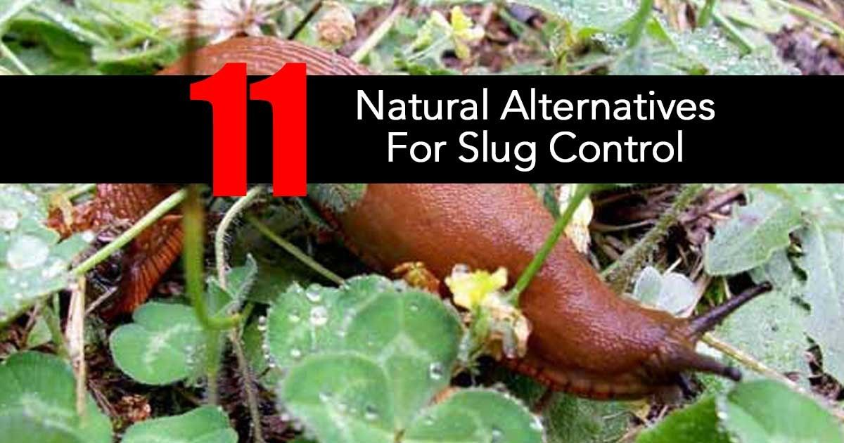 How To Get Rid Of Slugs In Your Garden 9 All Natural