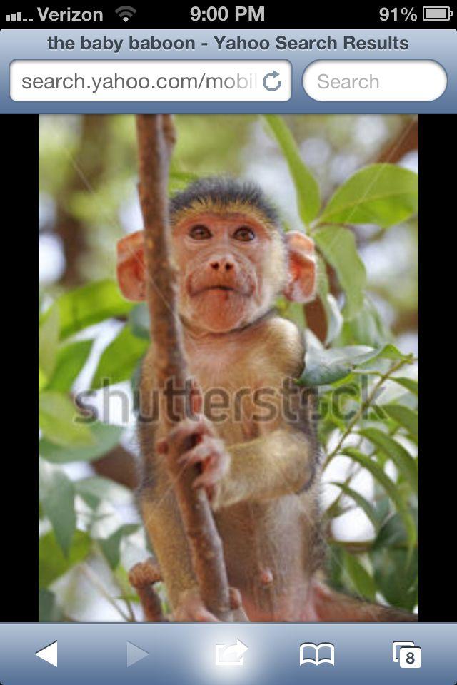 Asome monkey