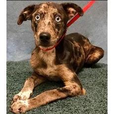 Hester Harris County Animal Shelter Houston Texas Pets Overstock Com Animals Animal Sanctuary Dog Search