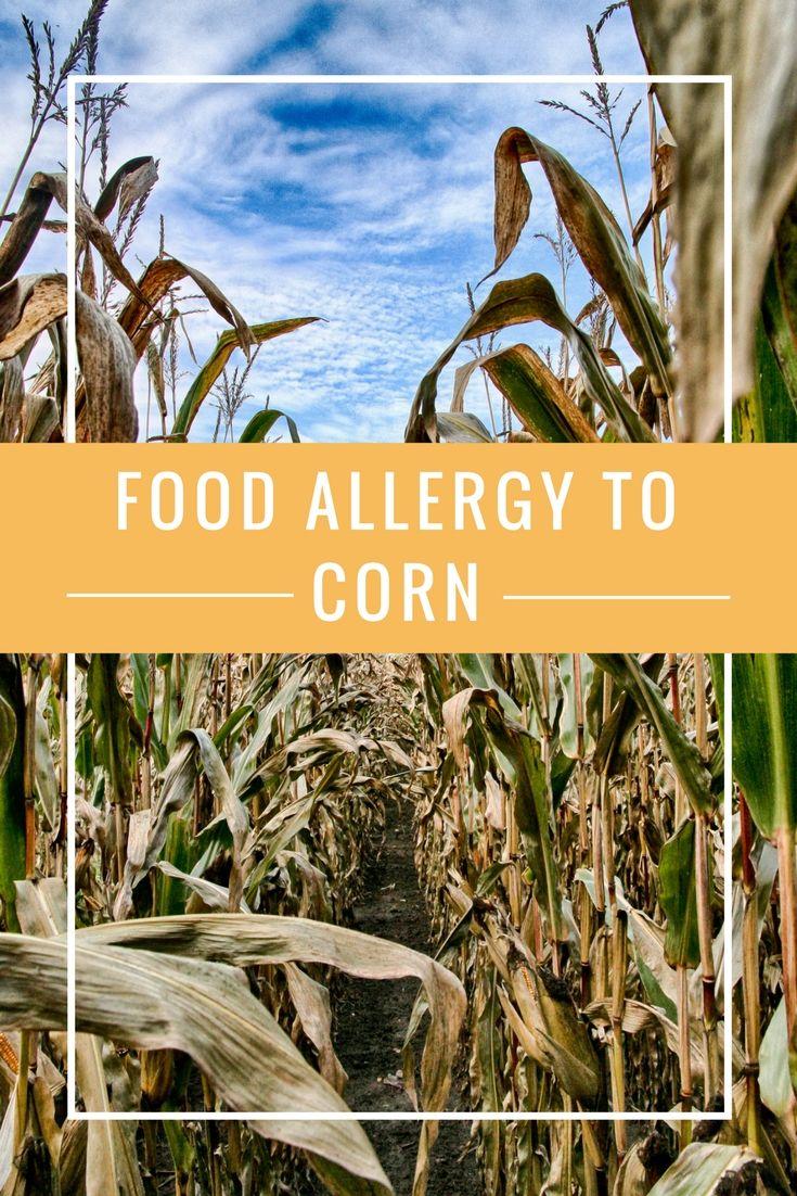 Food Allergy to Corn and Corn Ingredients   Food allergies ...