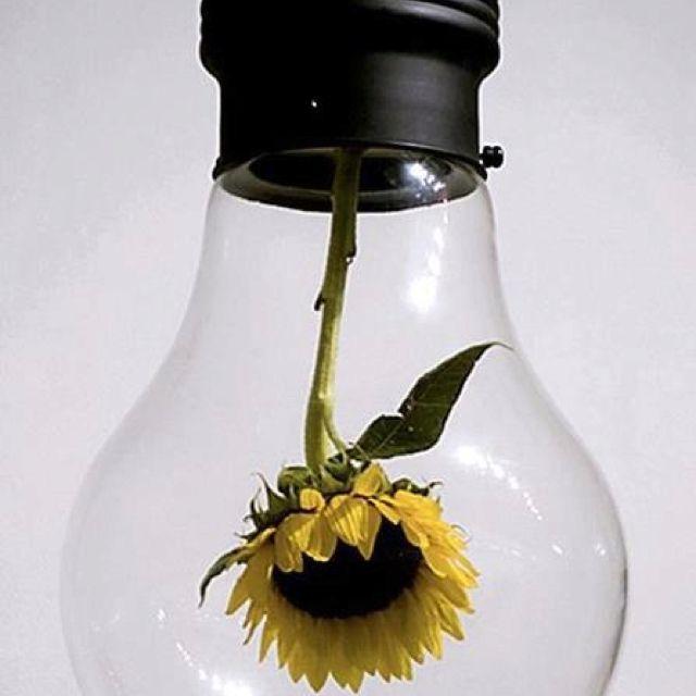 人の気持ちを明るくする、電球だ!