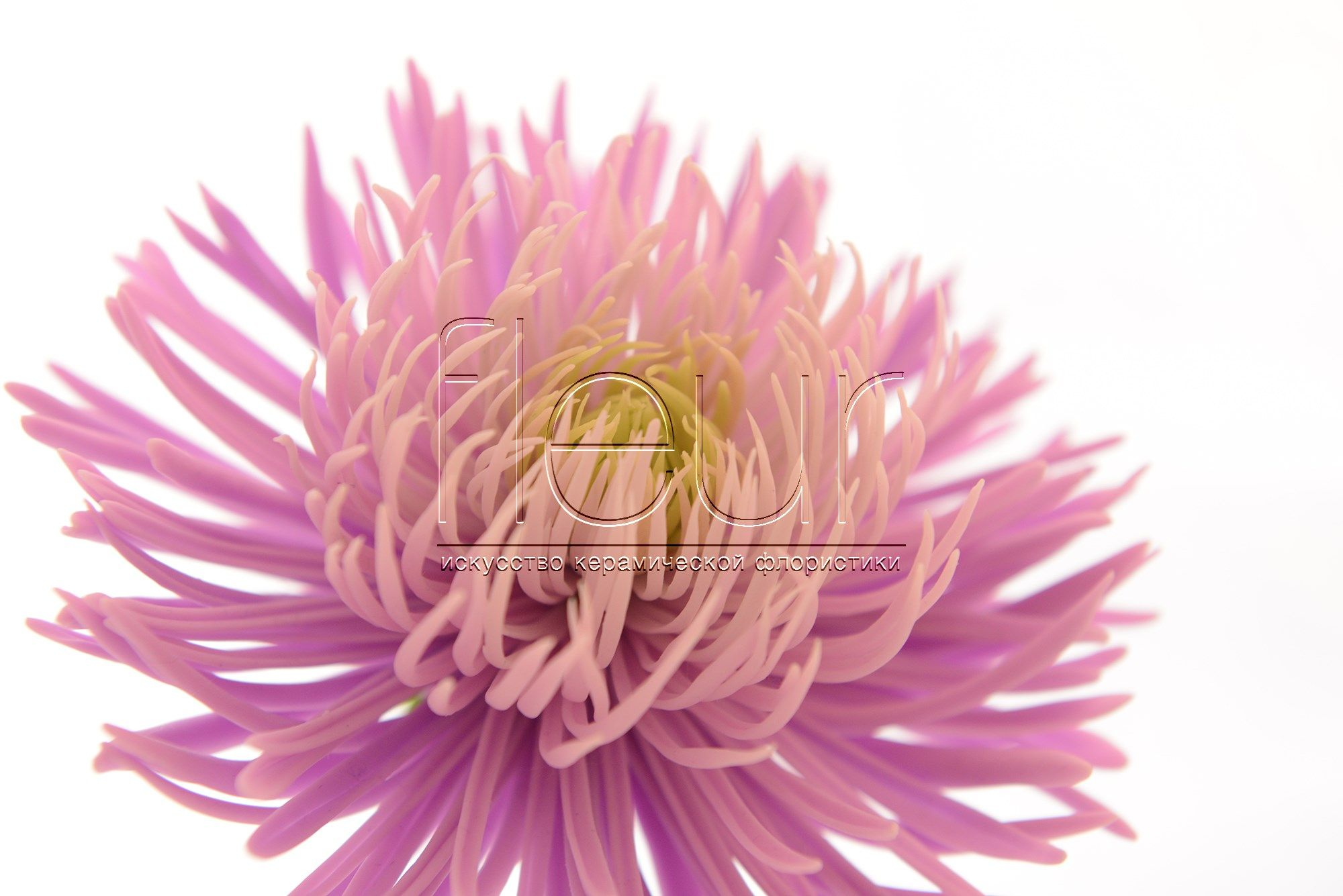 This Flower Is Made Out From Clay Fleur Do You Believe It Www