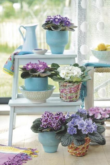 macetas para violetas africanas