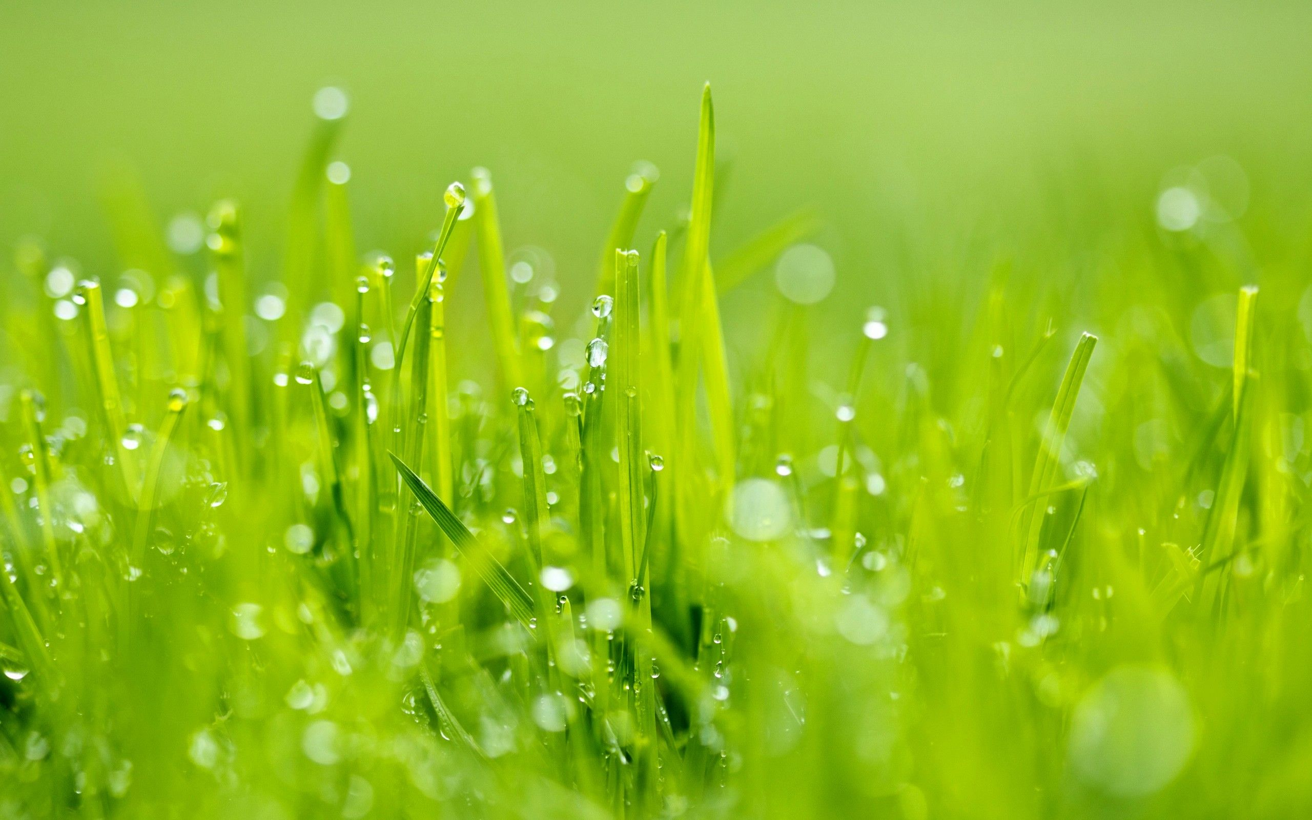 Bright Green Grass #Wallpaper