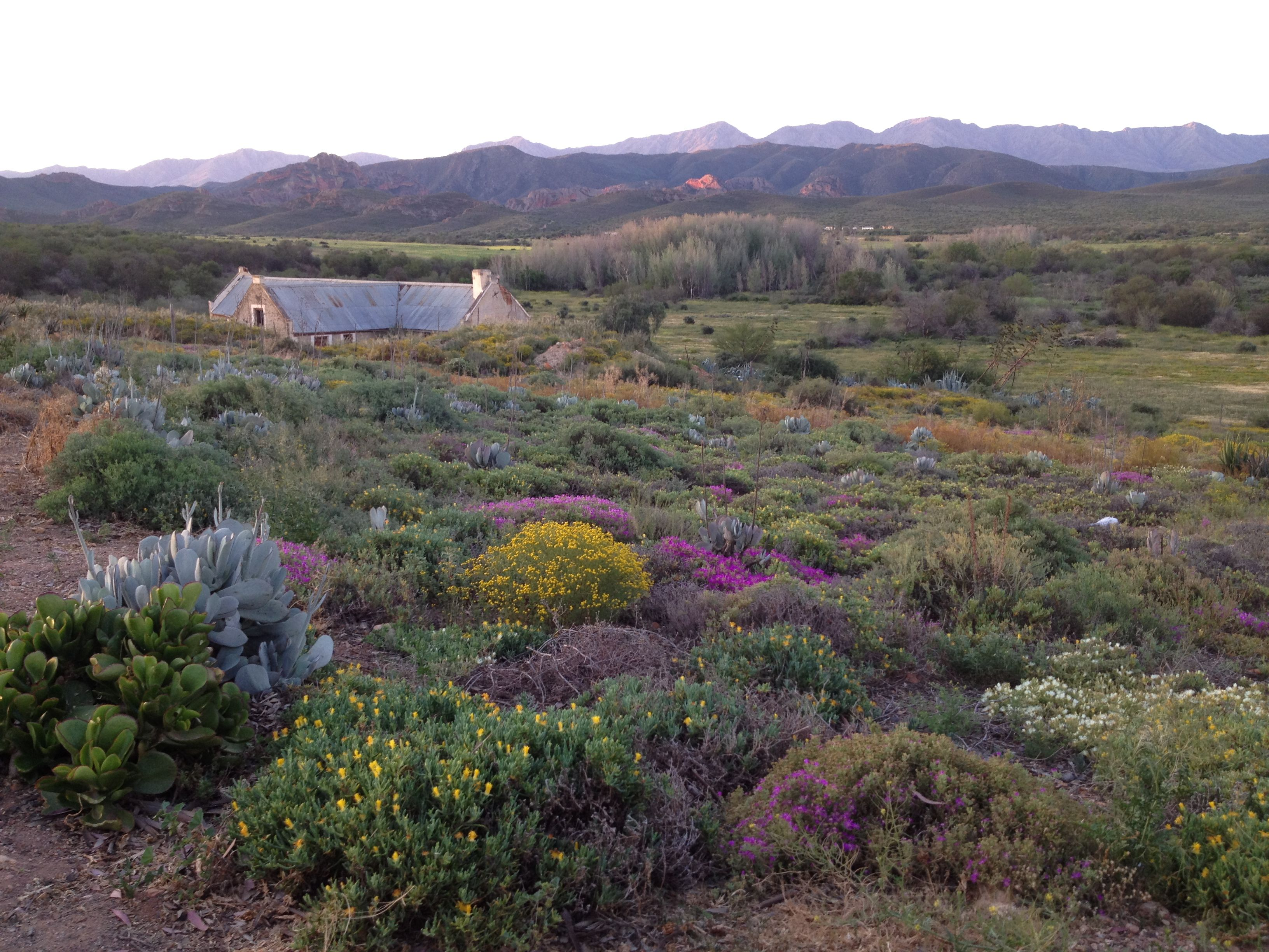 Find this pin and more on we love the karoo for its