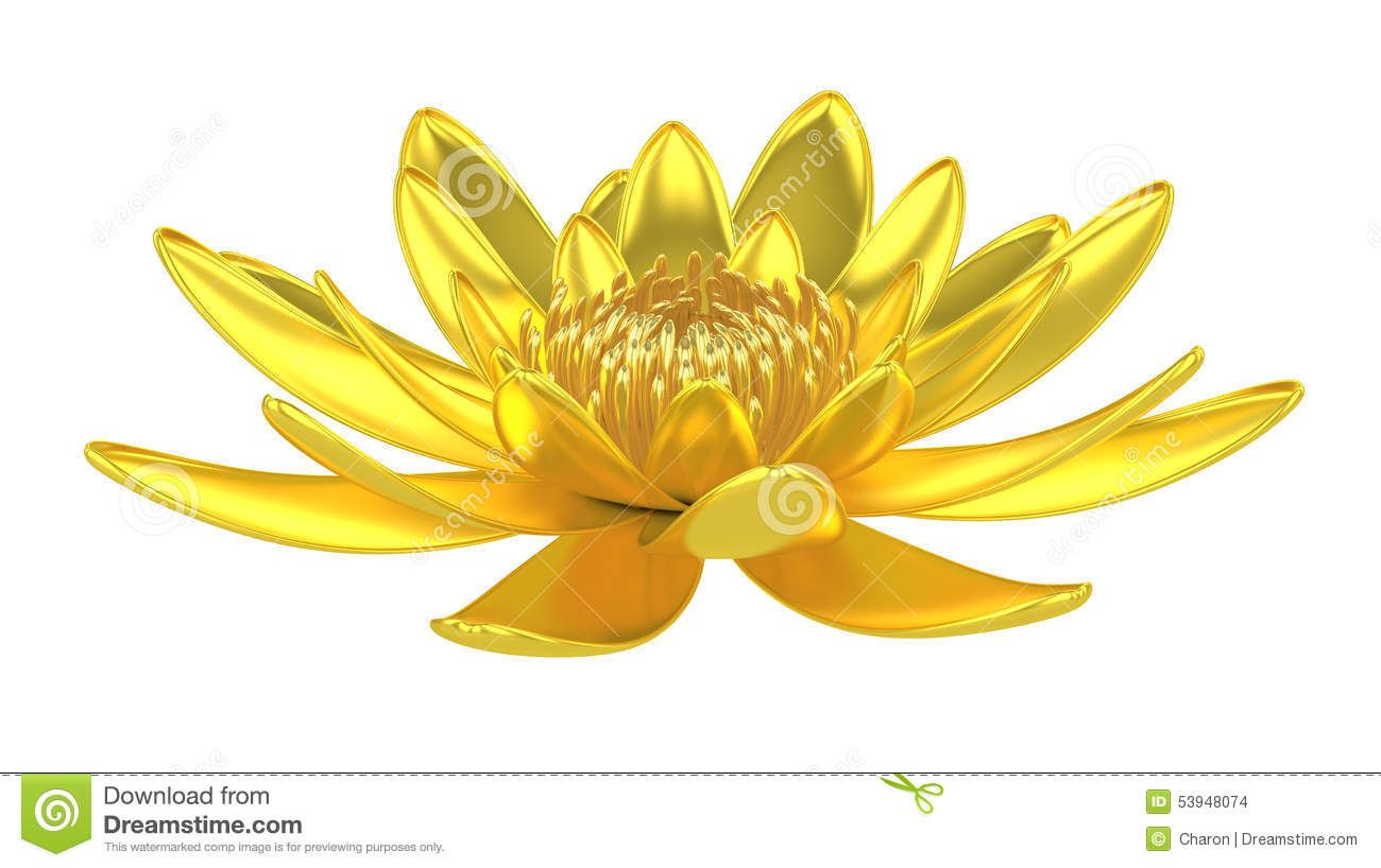 water lily flower meaning