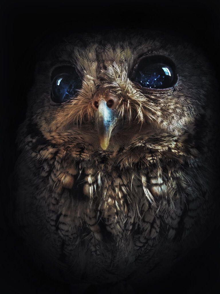Starry Eyed Owl Named Zeus Owl Zeus Full Moon In Sagittarius