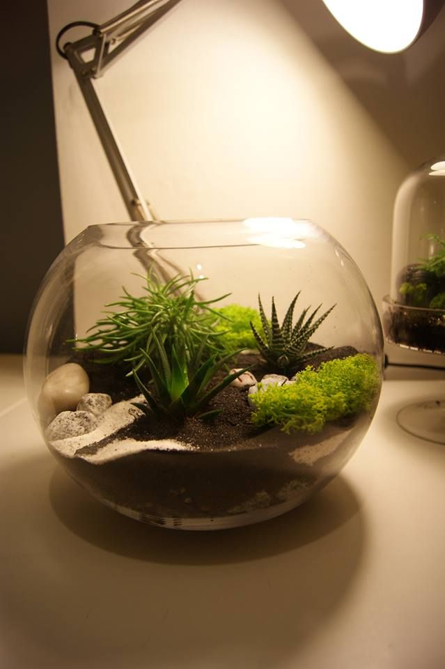 r alisez un terrarium d co en quelques minutes le coin jardin jardinage pinterest bocal. Black Bedroom Furniture Sets. Home Design Ideas