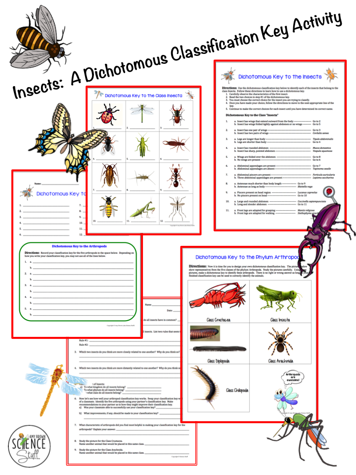 Science Stuff Insects A Dichotomous Classification Key Activity Dichotomous Key Life Science Middle School High School Science