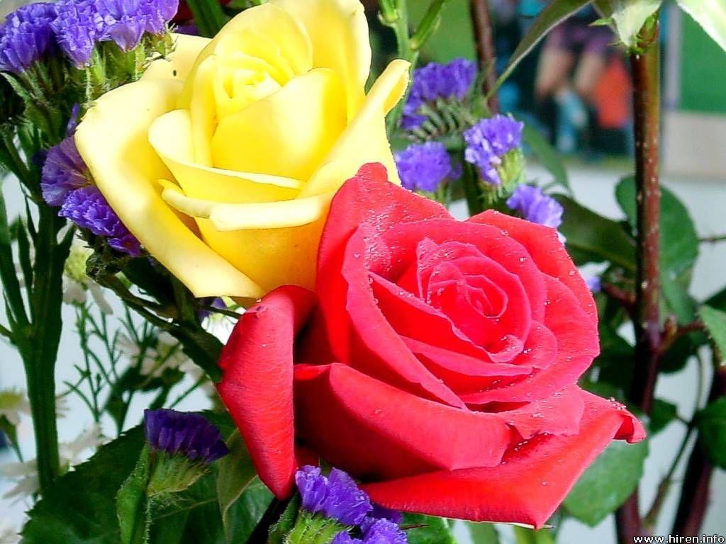Pin On Romantic Roses