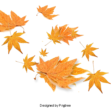 Maple Fall Leaves Maple Vector Png Transparent Clipart Image And Psd File For Free Download Autumn Leaves Leaves Vector Maple Leaf