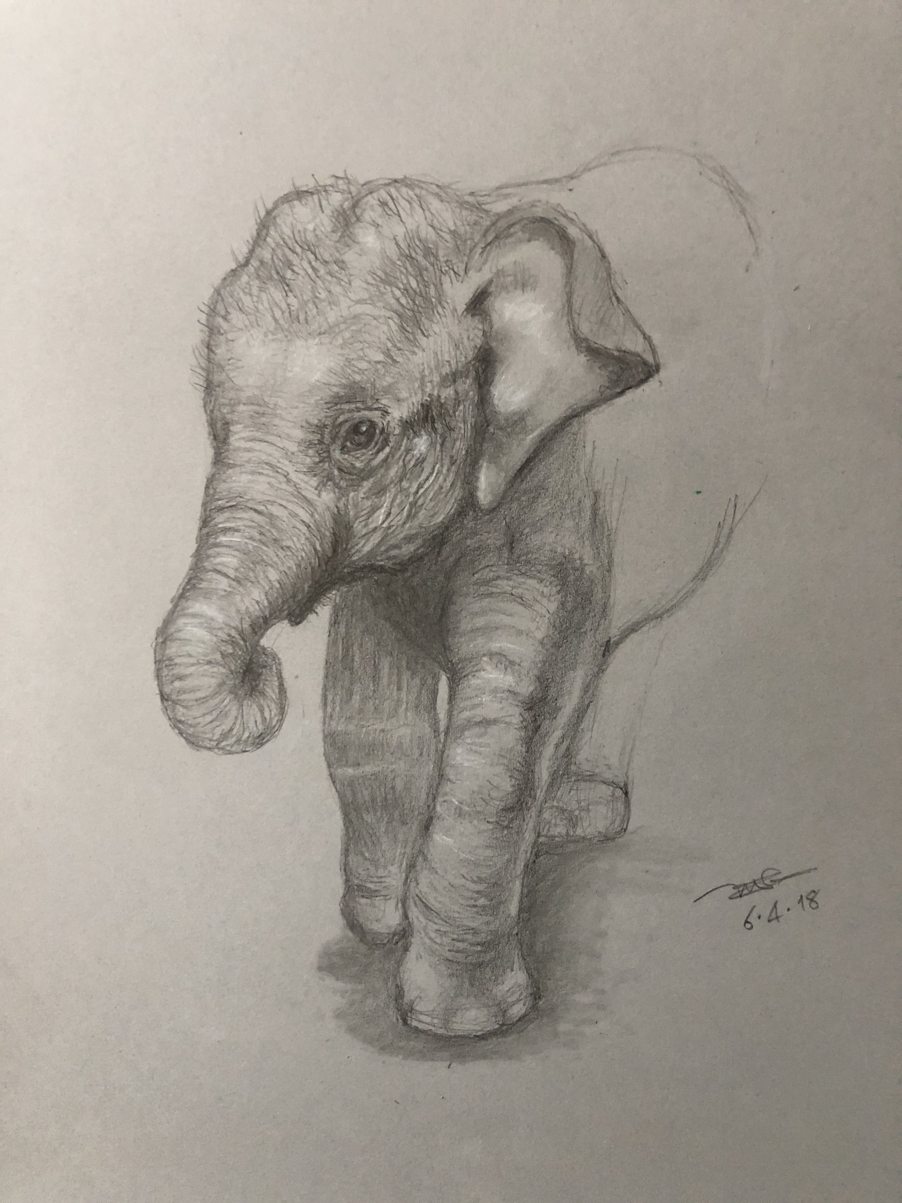 Beautiful pencil drawing artwork pencil drawings of animals sketches of animals elephant drawings