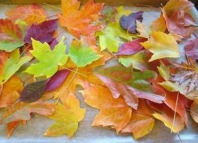DIY Wax leaves