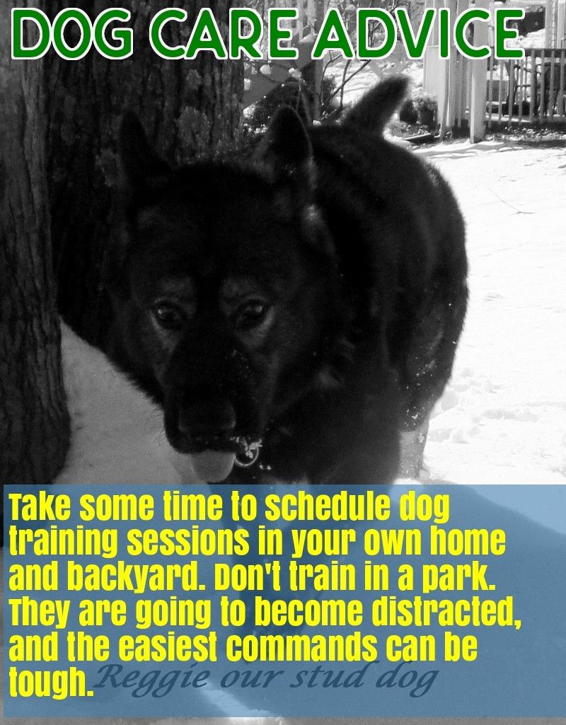 You And Your Dog Tips For A Great Relationship Pet Care Dogs Dog Care Stud Dog