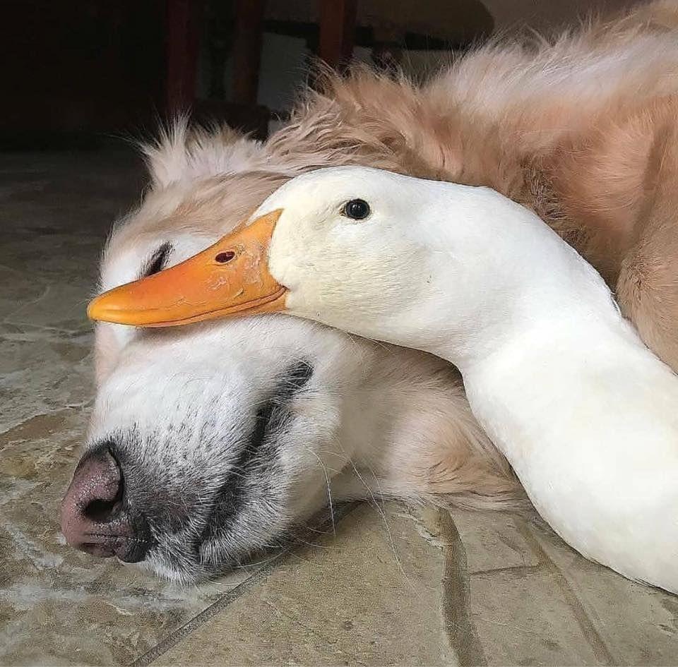 Riityeyayeѕt Reverdetoi Tymvℓya Fadedthrill Animali Animali Divertenti Animali Carini