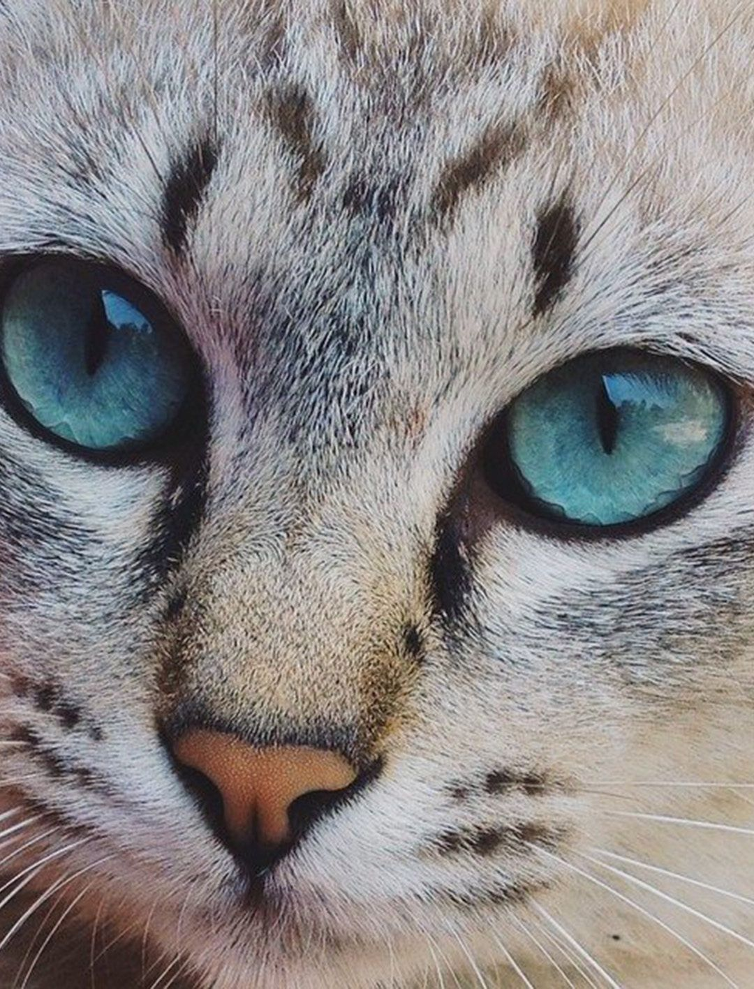 Iphone Wallpaper Tumblr Free High Resolution Hd Retina Cute Cats Cats Cats And Kittens