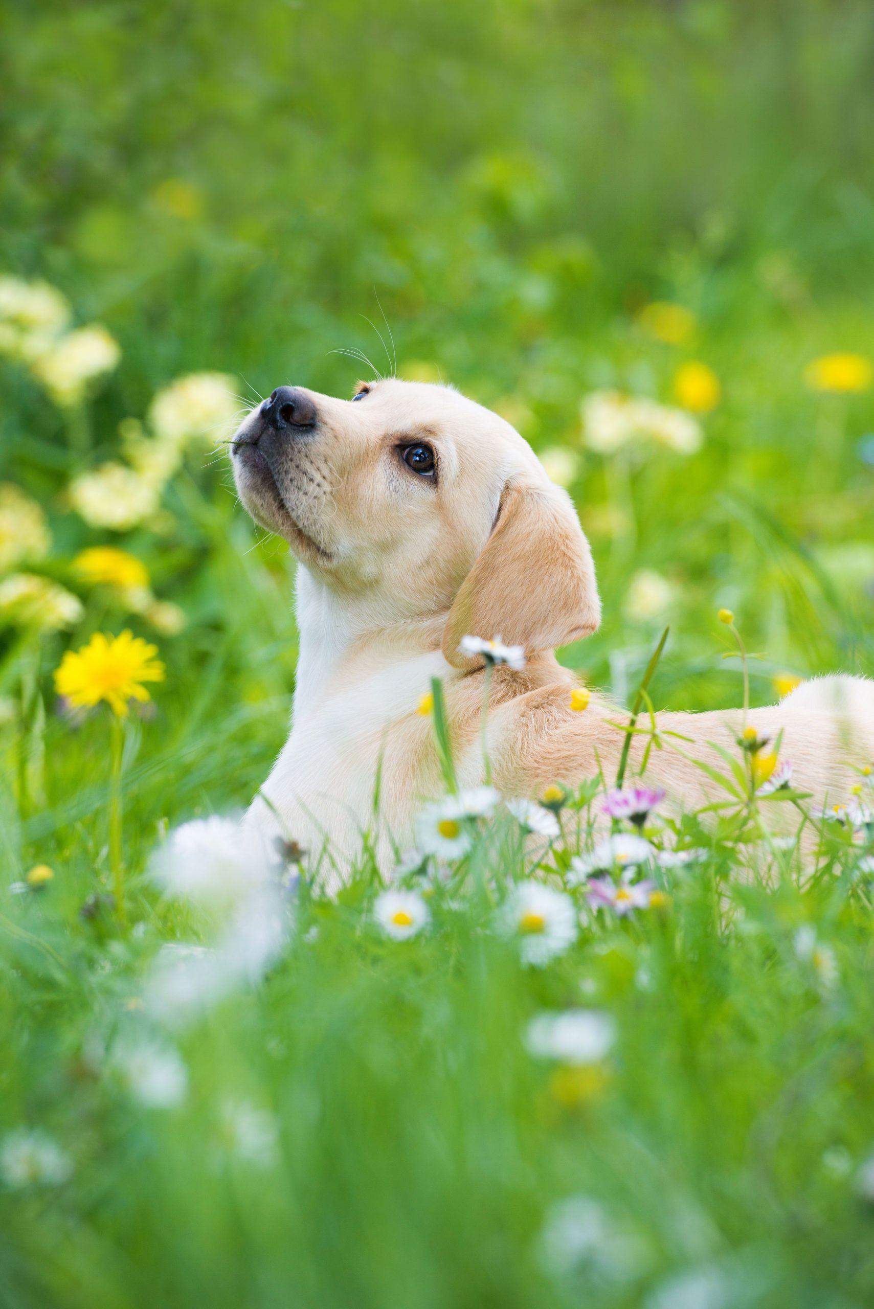 Pin Auf Haustiere