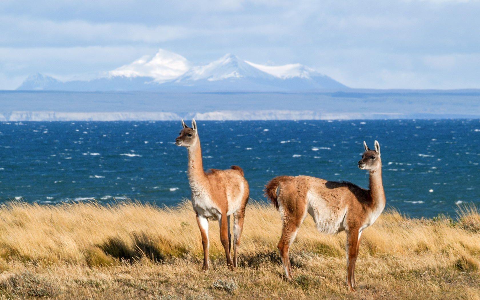 Vicu 241 As In Tierra Del Fuego By Horst Hammerschmidt On