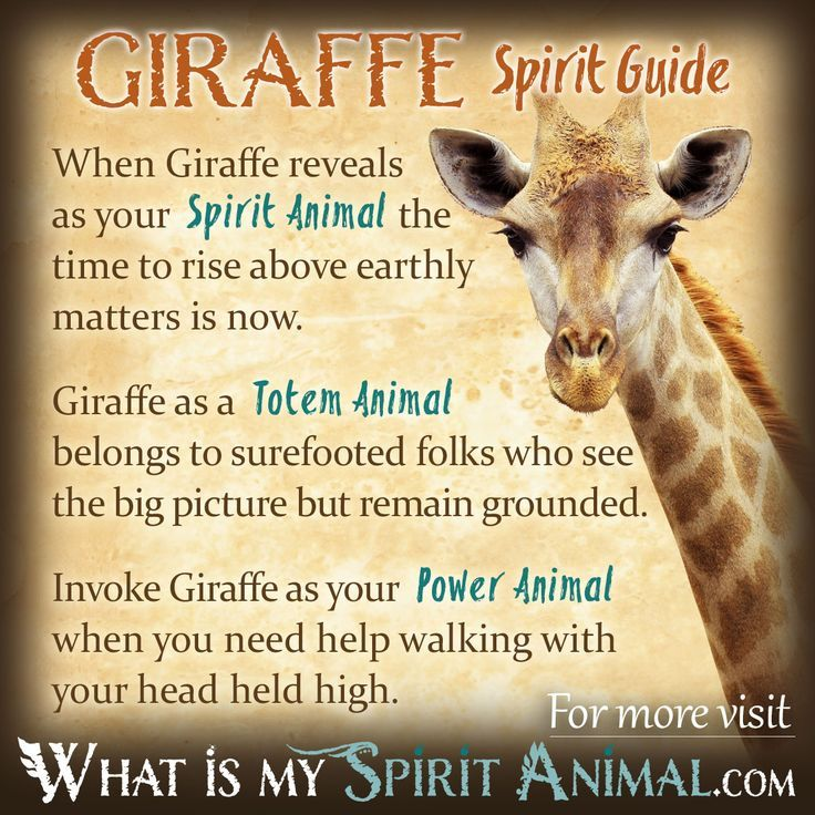 Giraffe Symbolism Meaning In 2018 Critters Pinterest Power