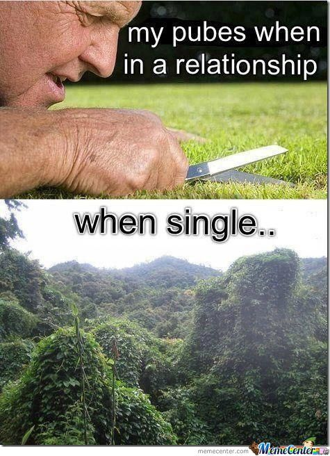 My Pubes In A Relationship Vs When Single Humor Funny Memes Funny Pictures