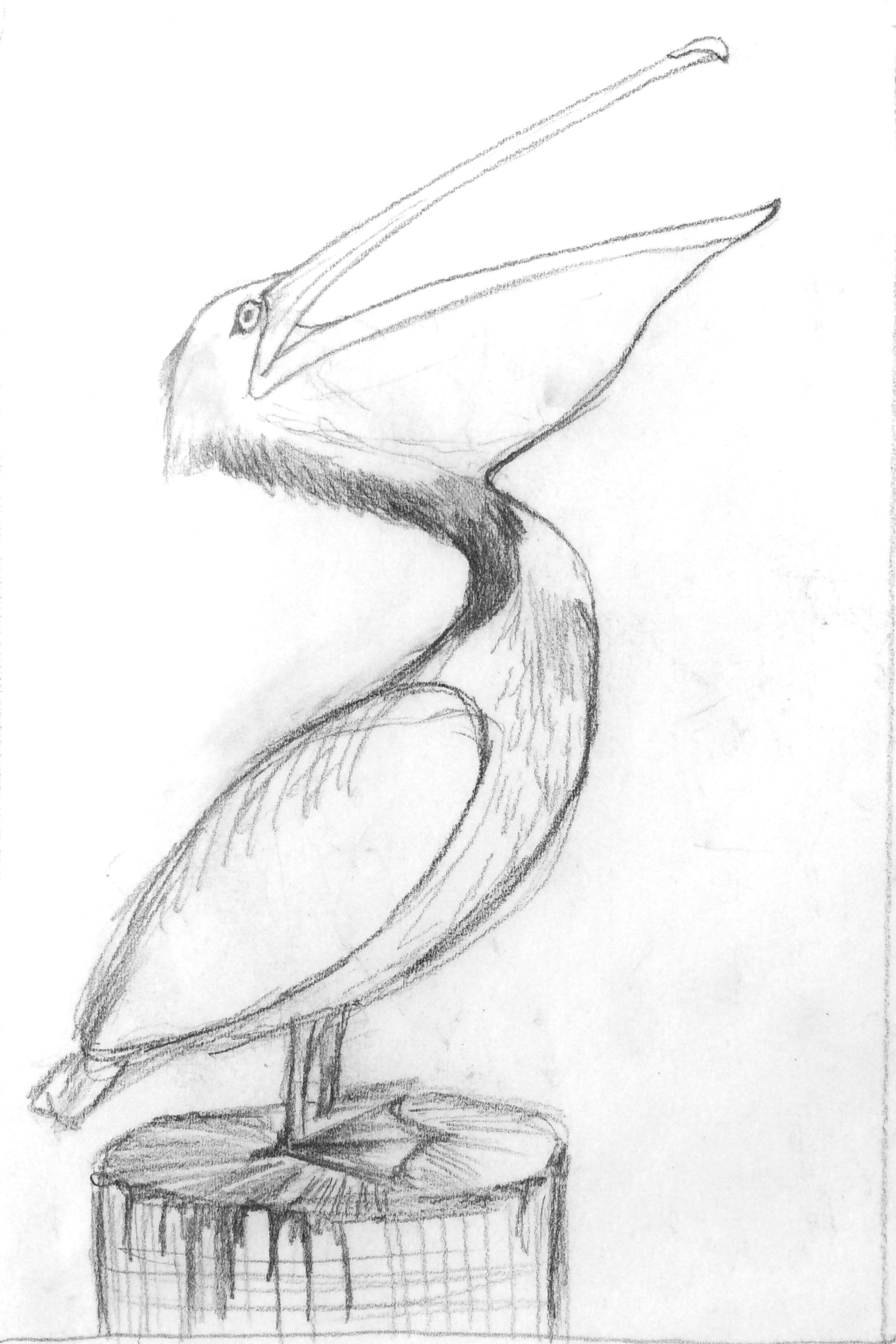 Pelican Thumbnail sketch- MLighthipe©2014