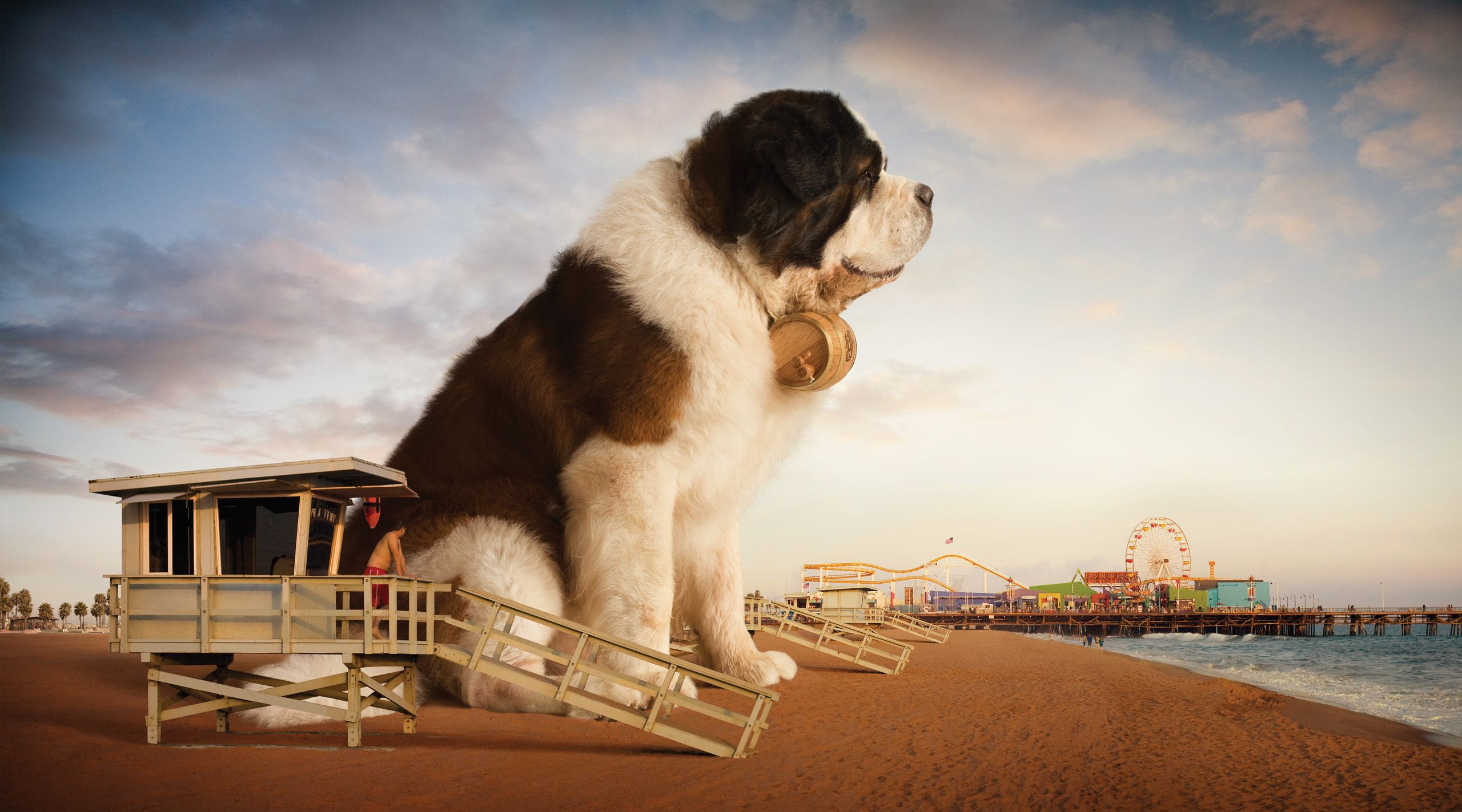 Giant-Saint-Bernard-Wallpaper-hd