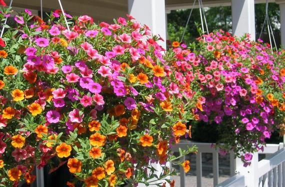 Jardín Colgante con Flores Coloridas Arbustos Para Jardin