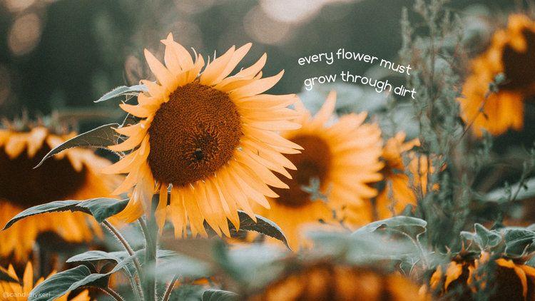 Every Flower Must Grow Through Dirt Desktop Wallpaper Cute Desktop Wallpaper Laptop Wallpaper Desktop Wallpapers