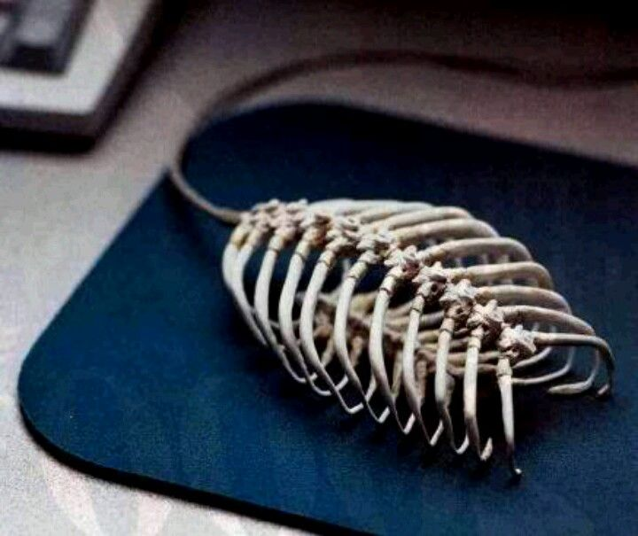 Ribcage mouse for computer | Mouse, Best computer, Cool stuff