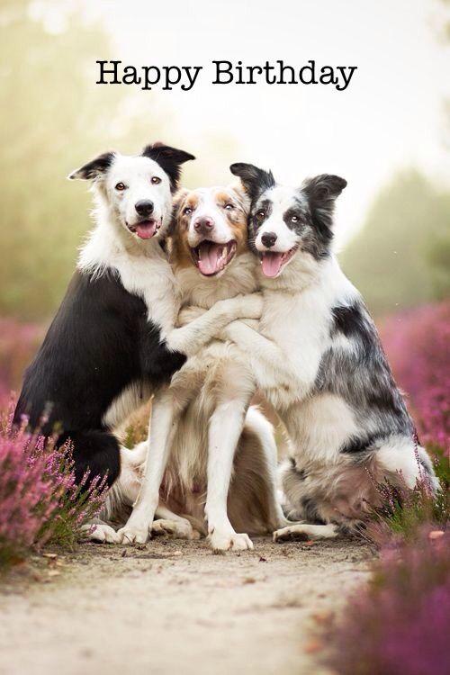 Happy Birthday Chrisna Happy Dogs Cute Animals Funny