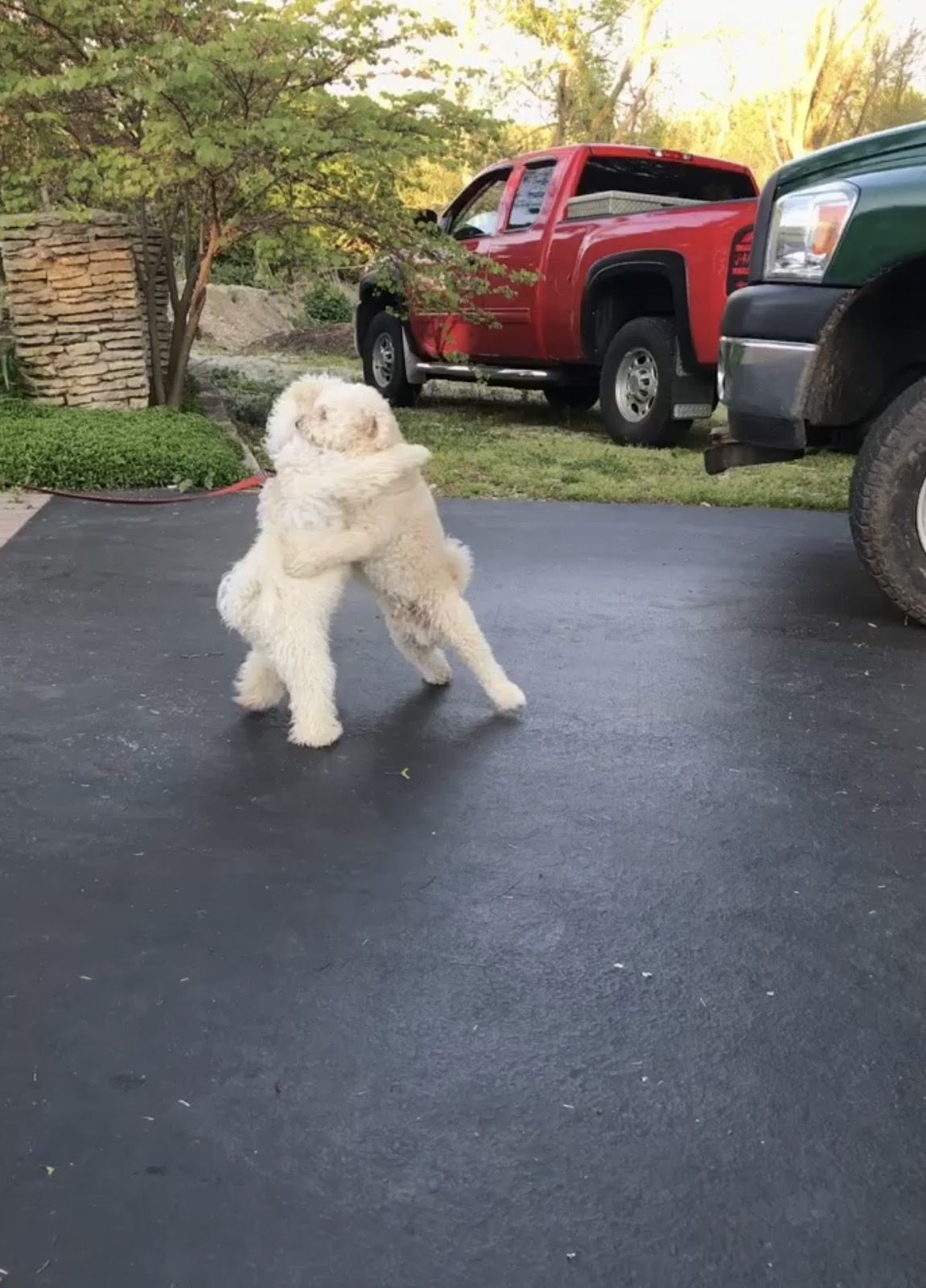 My dog giving his half brother a hug http://ift.tt/2qkymTg