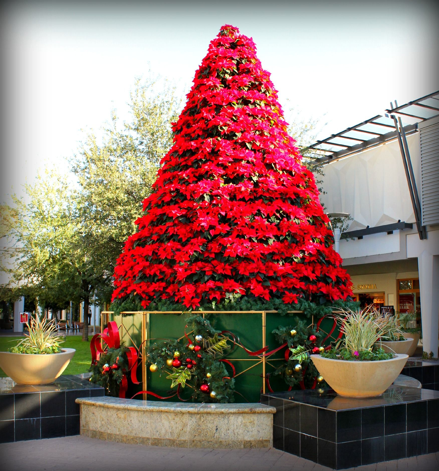 The Poinsettia Tree At Biltmore Fashion Park Christmas Flowers Christmas Plants Christmas Light Displays