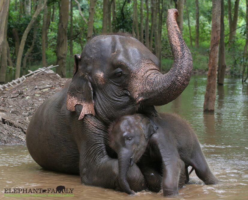 It's #elephantfriday! And don't forget Mother's Day, a reminder from the most awesome mothers in the animal kingdom. pic.twitter.com/Cvf2epLWid