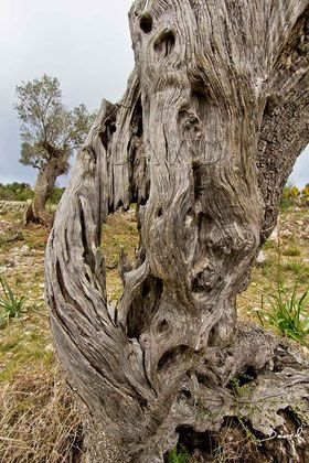 Totholz Ist Nicht Nur Ausgesprochen Malerisch Sondern Auch Ein Wertvoller Lebensraum Naturgarten Wildlife Garden Deadwood Wildbienen Nisthilfen Insektenhotel
