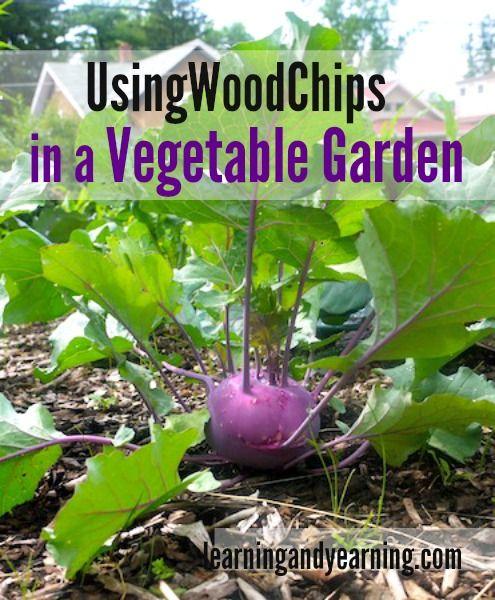 Using wood chip mulch in a vegetable garden vegetable garden gardens and woods for Wood chip mulch vegetable garden
