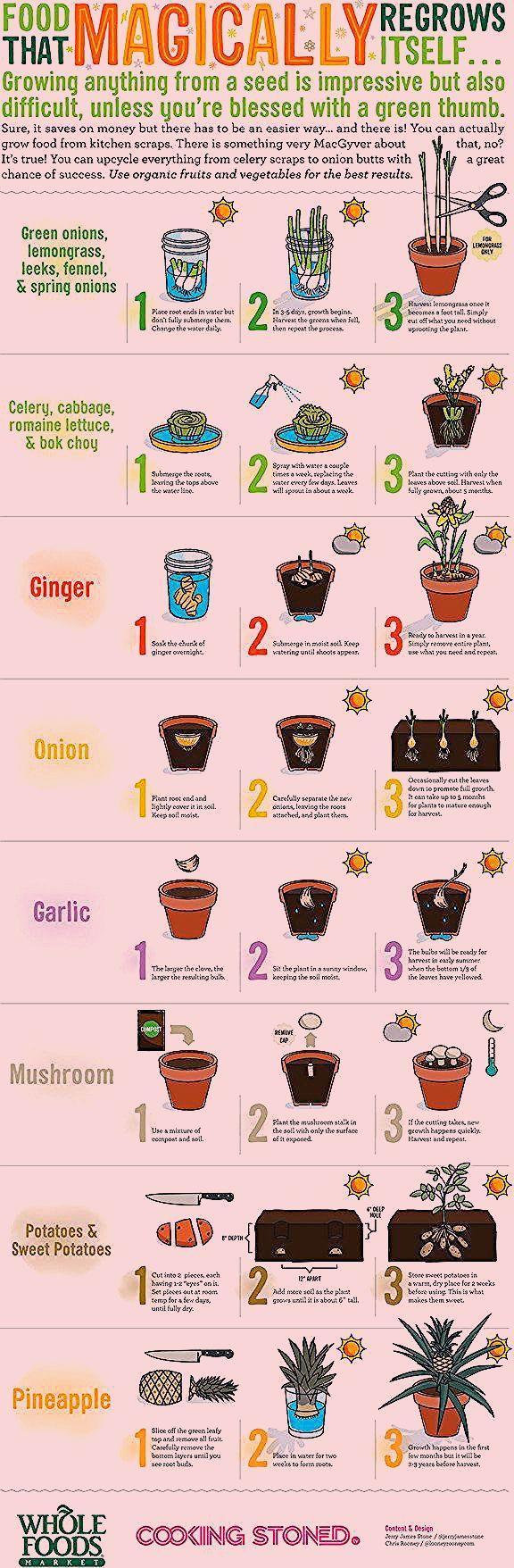 Photo of Tolle Ideen, die jeder Gartenliebhaber wissen sollte – Diyselbermachen