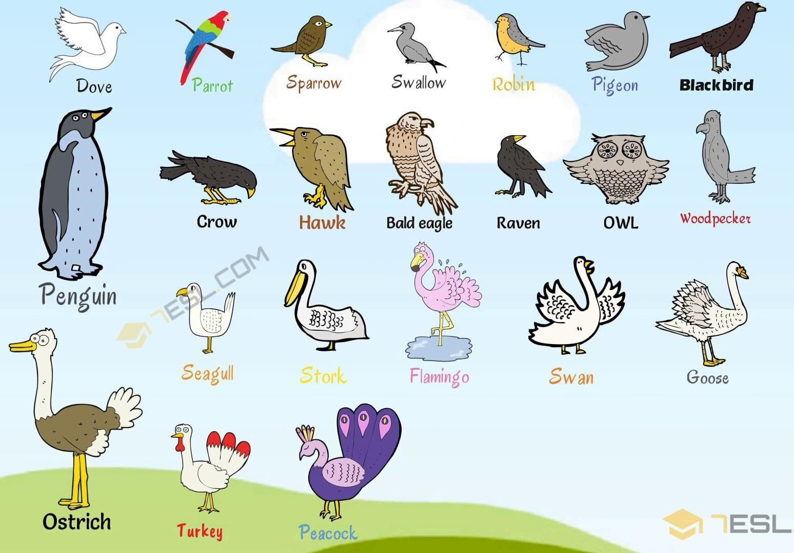 Bird Names List Of Birds With Useful Birds Images Birds