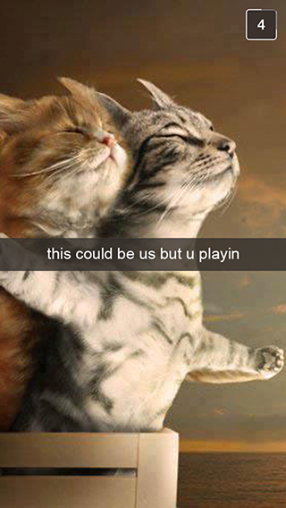 27 Snapchats From Your Cat. more here http://artonsun.blogspot.com/2015/05/27-snapchats-from-your-cat-more-here_7.html