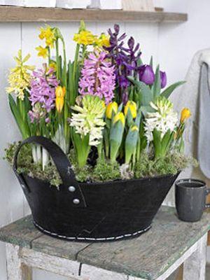 Home Garden Deco Fleurs Printemps Bulbes De Printemps Et