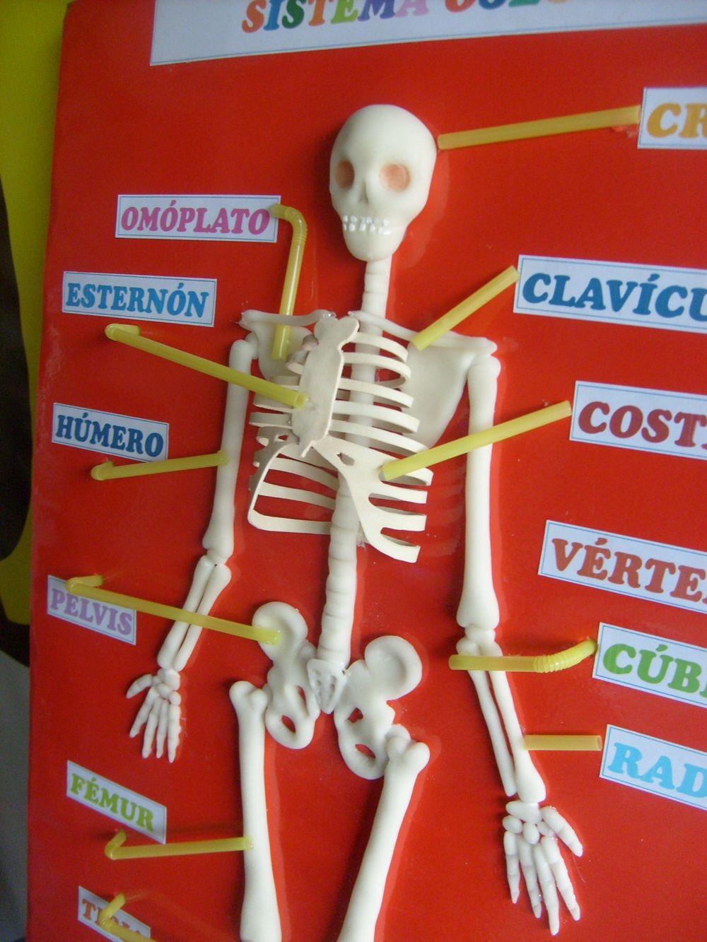 Maquetas Como Hacer Una Maqueta Del Esqueleto | Tattoo Design Bild ...